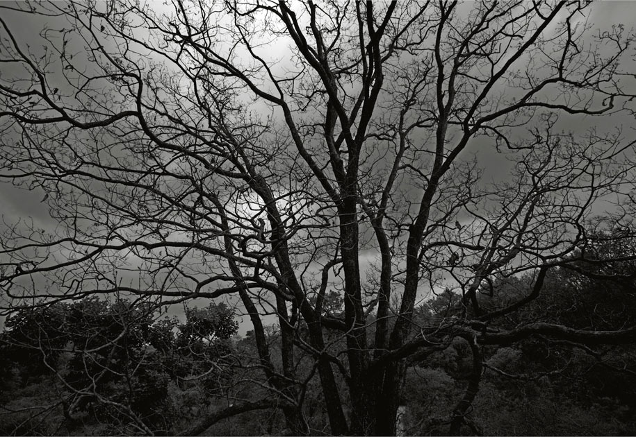 05_wwf.tree.blackandwhite.ogilvy&mather.corbett.nationalpark.india.jpg