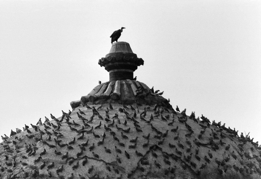 02_tomb.vulture.indiagate.delhi.blackandwhite.india.pigeons.jpg
