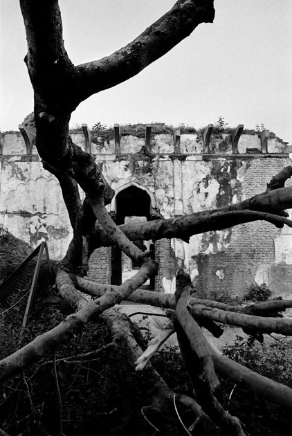 07_intach.ruins.tree.delhi.blackandwhite.india.jpg
