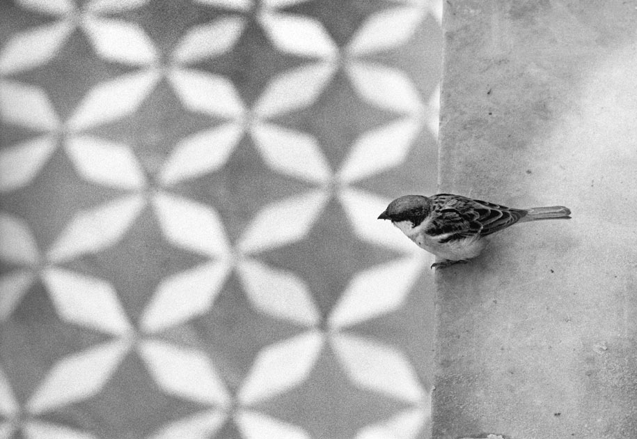 04_bird.sparrow.blackandwhite.pattern.india.jpg