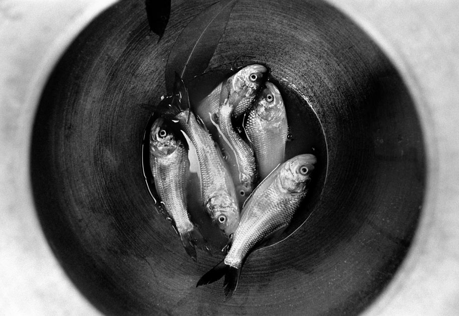 01_fish.pot.bastar.theforgottenframes.india.jpg